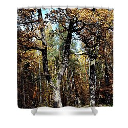 Autumn In Forest Shower Curtain by Henryk Gorecki