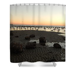 Beach Rocks Barnacles And Birds Shower Curtain by Expressionistart studio Priscilla Batzell
