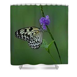 Butterfly On Flower  Shower Curtain by Sandy Keeton
