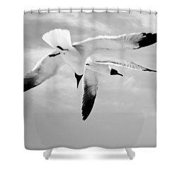 Chaos - Seagulls Black And White Shower Curtain