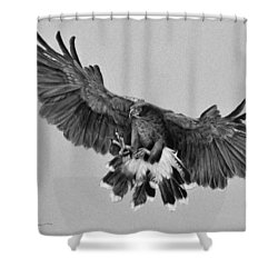 Da181 Harris's Hawk By Daniel Adams Shower Curtain