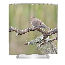 Shower Curtain featuring the photograph    Early Mourning Dove by Kathy Gibbons