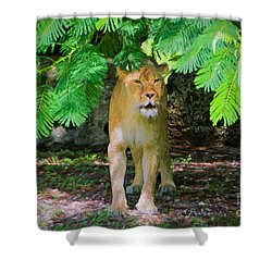 Shower Curtain featuring the painting  Emerging From The Shadows by Judy Kay
