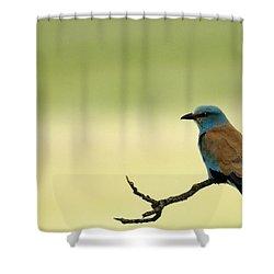 European Roller Shower Curtain