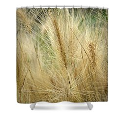 Foxtail Barley Shower Curtain by Jouko Lehto
