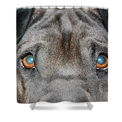 Gandalfs Eyes Shower Curtain