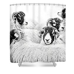In Winters Grip Shower Curtain