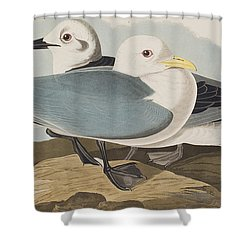 Kittiwake Gull Shower Curtain by John James Audubon