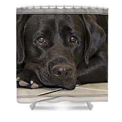 Labrador Retriever A1a Shower Curtain