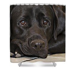 Labrador Retriever A1b Shower Curtain