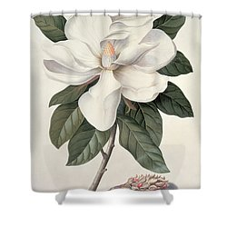 botanical shower curtains | fine art america