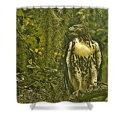 Red-tail Posing Shower Curtain by Phill Doherty