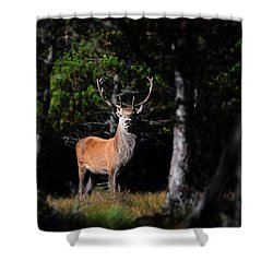 Stag In The Forest Shower Curtain