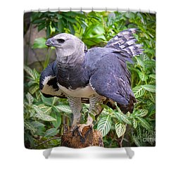Shower Curtain featuring the photograph  The Harpy Eagle by Judy Kay