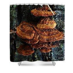 Tree Fungi Shui Shower Curtain