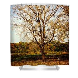 Wisdom Tree Shower Curtain by Kyle West
