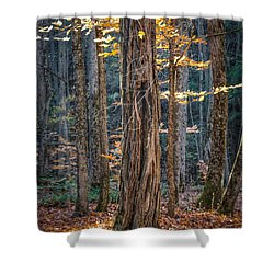 #0187 - Dummerston, Vermont Shower Curtain