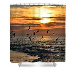 0221 Gang Of Gulls At Sunrise On Navarre Beach Shower Curtain