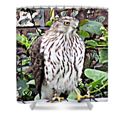 03192015 Sparrow Hawk Shower Curtain