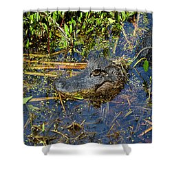 04042015 Jean Laffitte Alligator Shower Curtain