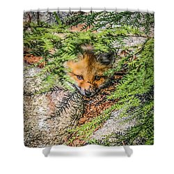 #0527 - Fox Kit Shower Curtain