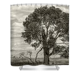 #0543 - Southwest Montana Shower Curtain
