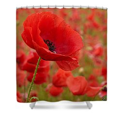 Red Poppies 3 Shower Curtain by Jouko Lehto