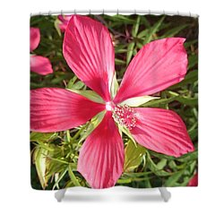 Hibiscus Coccineus Shower Curtain