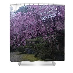 Shidarezakura Mean A Drooping Cherry Tree  Shower Curtain
