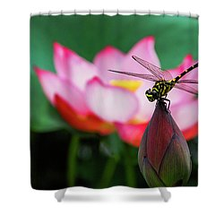 A Dragonfly On Lotus Flower Shower Curtain