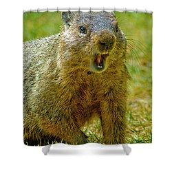 A Hungry Fellow  Shower Curtain by Paul W Faust - Impressions of Light
