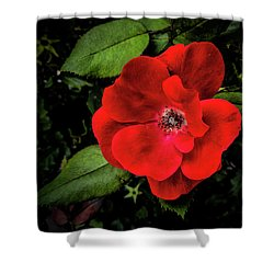 A Knockout Shower Curtain