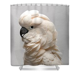 A Salmon-crested Cockatoo Shower Curtain