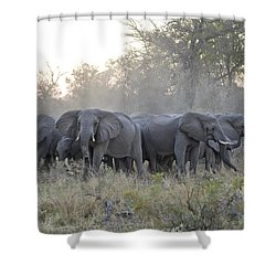 African Elephant Loxodonta Africana Shower Curtain by Suzi Eszterhas