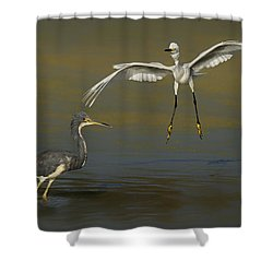 Afternoon In The Wetlands Shower Curtain