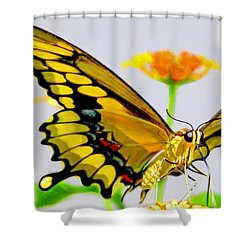 Afternoon Sip Shower Curtain by Charlotte Schafer
