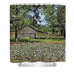 Alabama Cotton Field Shower Curtain by L O C