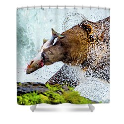 Shower Curtain featuring the photograph Alaska Brown Bear by Norman Hall