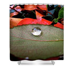 All Aboard Shower Curtain by CML Brown