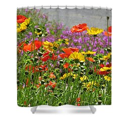 Along The Road Shower Curtain by Jeanette Oberholtzer