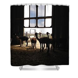 Alpaca  Shower Curtain