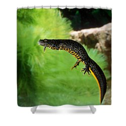 Alpine Newt Triturus Alpestris Shower Curtain by Gerard Lacz