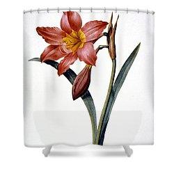 Amaryllis Shower Curtain by Granger