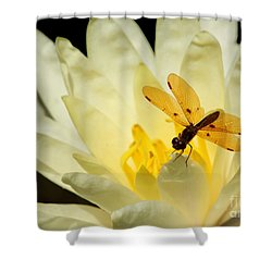 Amber Dragonfly Dancer 2 Shower Curtain