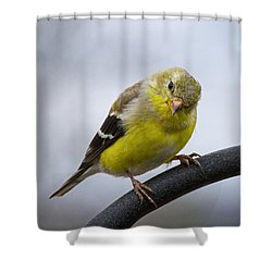 American Goldfinch Shower Curtain
