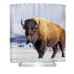 American Legend Shower Curtain by Jack Bell