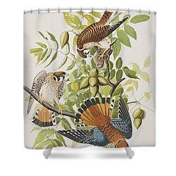 American Sparrow Hawk Shower Curtain by John James Audubon