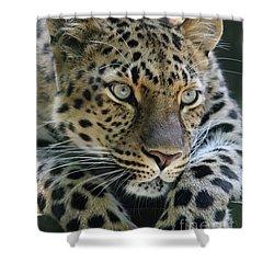 Amur Leopard #2 Shower Curtain
