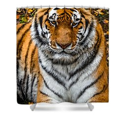 Amur Tiger  Shower Curtain