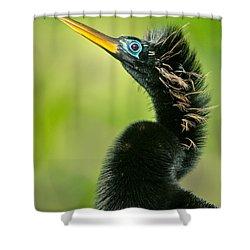 Anhinga Anhinga Anhinga, Tortuguero Shower Curtain